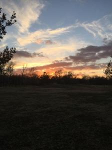 Seen on my run: beautiful Texas sunset