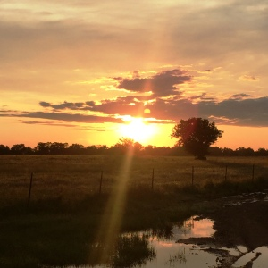 5 miler sunrise